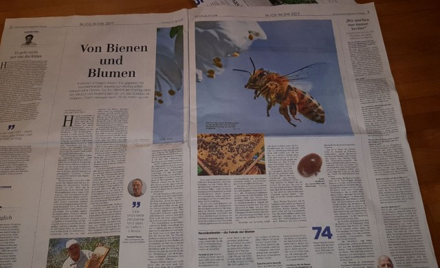 Zeitungsbild Bienen-Artikel HAZ